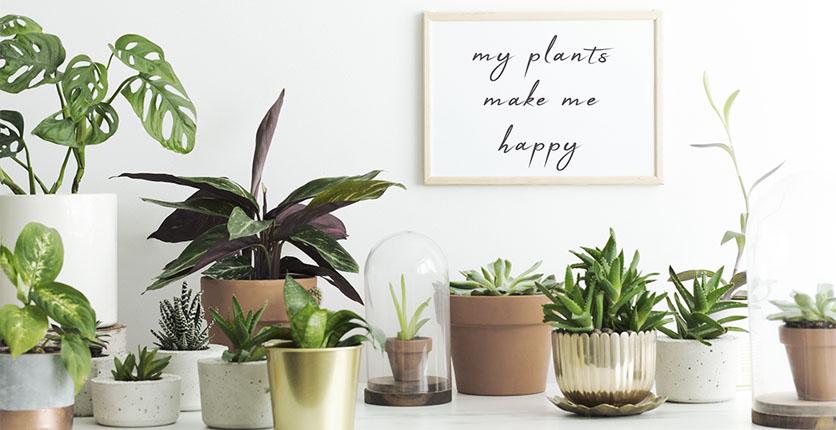 house plants happy