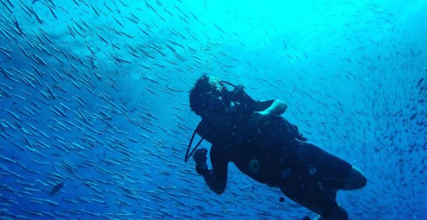 883jia ivy underwater photo
